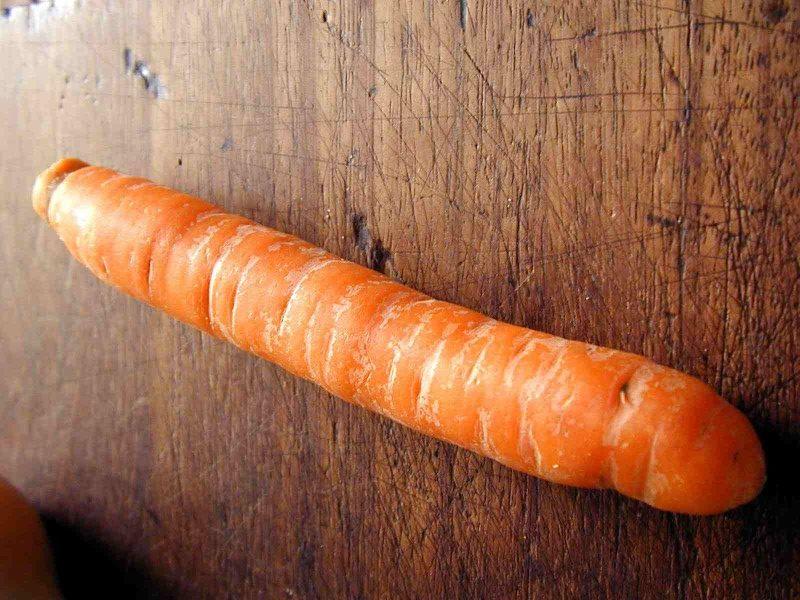 carota svezzamento