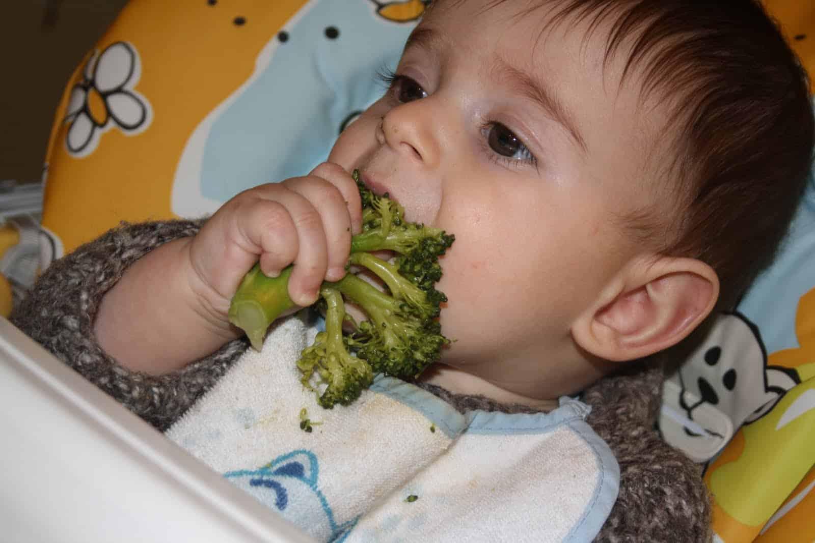 bambino 7 mesi svezzamento broccolo