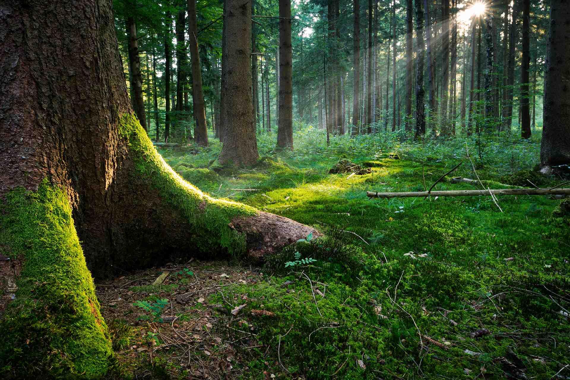 Foresta incantata autosvezzamento