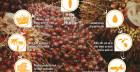 11 fatti sull'olio di palma secondo il WWF