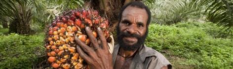 raccolta palma da olio
