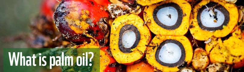 Frutto palma da olio