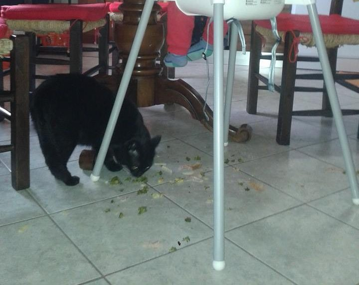 Autosvezzamento pavimento cibo